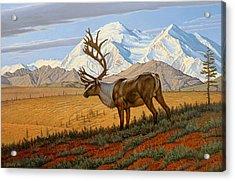 Denali  Acrylic Print by Paul Krapf