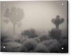 Desert Fog / No Watermark Acrylic Print by Diana Shay Diehl