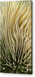 Desert Green Acrylic Print by Ben and Raisa Gertsberg