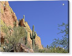 Desert Plants Of The Superstitions Acrylic Print by Christine Till