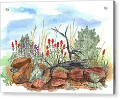 Desert Wildflowers Acrylic Print by Cathie Richardson