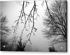 Design By Nature Acrylic Print by Brian Wallace