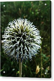 Details Acrylic Print by Lucy D