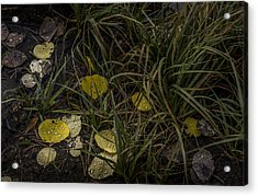 Dew Drops Acrylic Print by Cat Connor