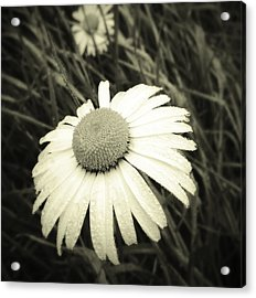 Dew Drops  Acrylic Print by Les Cunliffe