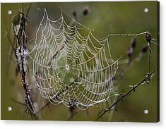 Dew Drops Spider Web Acrylic Print by Christina Rollo