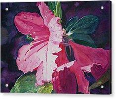 Dewy Azalea Acrylic Print by Christopher Reid