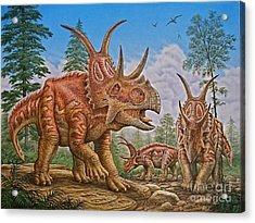Diabloceratops Acrylic Print by Phil Wilson