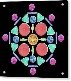 Diatoms And Radiolaria Acrylic Print by Steve Gschmeissner