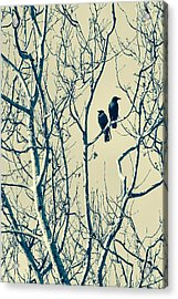 Differing Views Acrylic Print by Caitlyn  Grasso