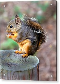 Dinner Time Acrylic Print by Robert Bales