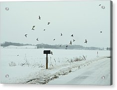Disturbing The Winter Foragers Acrylic Print by Julie Dant