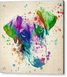 Doberman Splash Acrylic Print by Aged Pixel