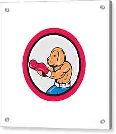 Dog Boxer Boxing Circle Cartoon Acrylic Print by Aloysius Patrimonio