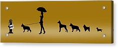 Doggie Queue Acrylic Print by Peter Stevenson