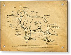 Doggy Diagram Acrylic Print by Tom Mc Nemar