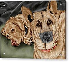 Dogs Acrylic Print by Karen Sheltrown