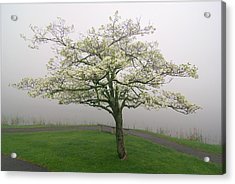 Dogwood And Fog With Bench - Abbott Lake - Peaks Of Otter Acrylic Print by Byron Spencer