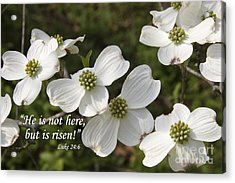 Dogwood Blooms With Scripture Acrylic Print by Jill Lang