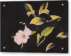 Dogwood Blossom Acrylic Print by Donna Oshea