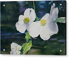Dogwood Blossoms Acrylic Print by Christopher Reid