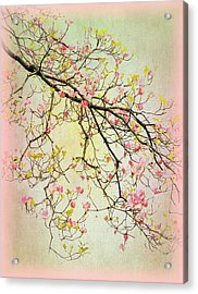 Dogwood Canvas 4 Acrylic Print by Jessica Jenney
