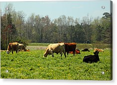 Doin What Comes Naturally Acrylic Print by Suzanne Gaff