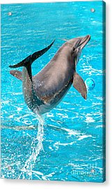 Dolphin Plays Acrylic Print by Michal Bednarek