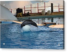 Dolphin Show - National Aquarium In Baltimore Md - 1212171 Acrylic Print by DC Photographer