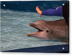 Dolphin Show - National Aquarium In Baltimore Md - 1212220 Acrylic Print by DC Photographer