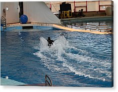Dolphin Show - National Aquarium In Baltimore Md - 1212245 Acrylic Print by DC Photographer