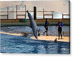 Dolphin Show - National Aquarium In Baltimore Md - 121226 Acrylic Print by DC Photographer
