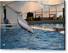 Dolphin Show - National Aquarium In Baltimore Md - 1212267 Acrylic Print by DC Photographer