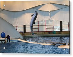 Dolphin Show - National Aquarium In Baltimore Md - 121254 Acrylic Print by DC Photographer