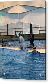 Dolphin Show - National Aquarium In Baltimore Md - 121267 Acrylic Print by DC Photographer
