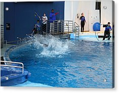 Dolphin Show - National Aquarium In Baltimore Md - 121293 Acrylic Print by DC Photographer