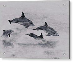 Dolphins Acrylic Print by Lucy D