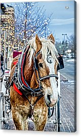 Donald 2 Acrylic Print by Baywest Imaging