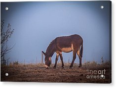 Donkey In The Fog Acrylic Print by Robert Bales