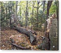 Door Bluff Headlands Cp Fallen Tree Acrylic Print by Jim Baker