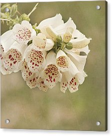 Dots-foxglove Flower Acrylic Print by Kim Hojnacki
