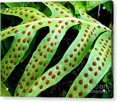Dots Acrylic Print by Kristine Merc