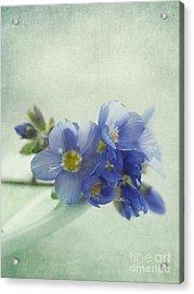 Douceur Acrylic Print by Priska Wettstein
