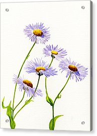 Aster Acrylic Print featuring the painting Douglas Aster Wild Flower by Sharon Freeman