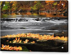 Down On The River Acrylic Print by Bill Wakeley