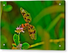 Dragonfly And Flower Acrylic Print by Lorri Crossno