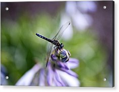 Dragonfly Acrylic Print by Christopher McPhail