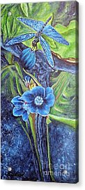 Dragonfly Hunt For Food In The Flowerhead Acrylic Print by Kimberlee Baxter