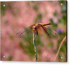 Dragonfly Acrylic Print by Rona Black