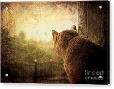 Dreamer Acrylic Print by Ellen Cotton